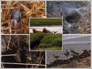 suffolk_wildlife