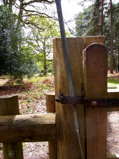 gateway to the new forest