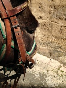 a donkey - as porter and fellow traveller