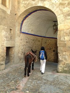travels with our donkey Ligoncete