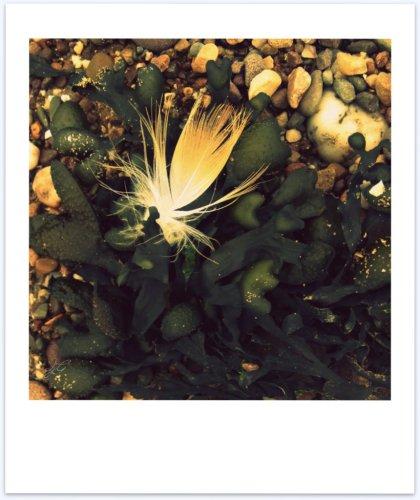 seaweed garden - polaroid poem
