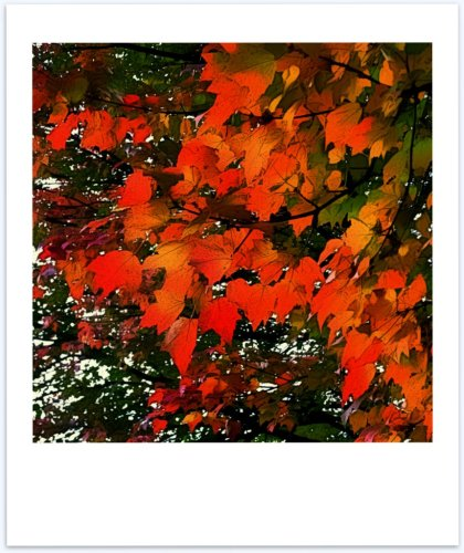 autumn leaves me speechless- polaroid poem