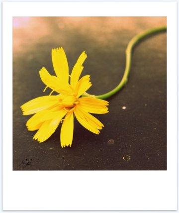 midweek poem - see what a flower