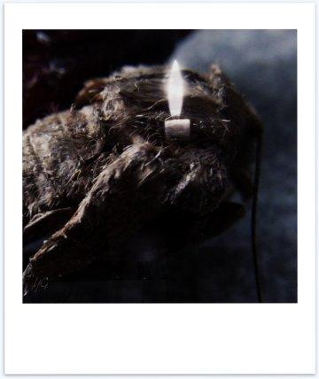 moth_polaroid_poem