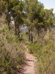 path through the pines