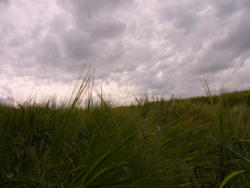 murakumo - rain cloud gathering