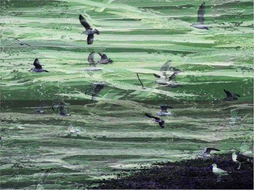 1-seagulls