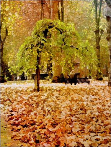 1-tree_st_pancras2_pe