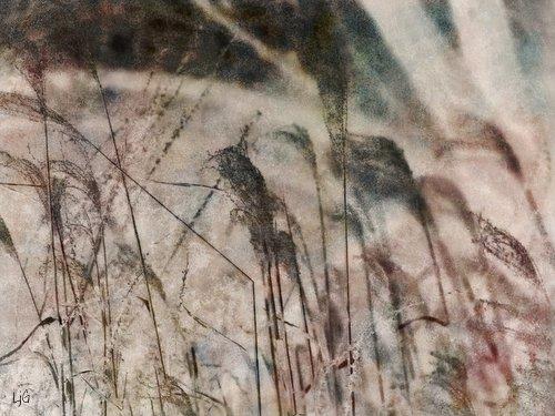 Reeds photoart