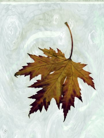grief is a leaf poem