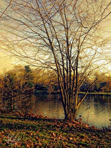 photart_poem_ arise_goldenmorningglow