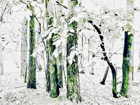 photoart and poem - wildwood