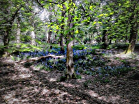 photoart_bluebellwood