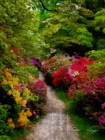 photoart & poem - woodland rhododendrons