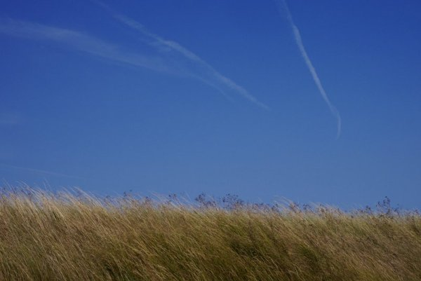blue sky & golden grasses - Suffolk