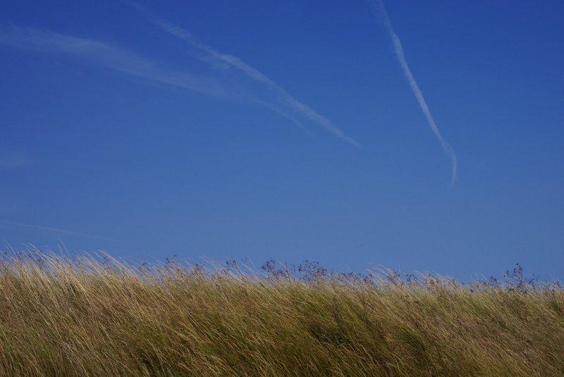 blue sky & golden grasses - Suffolk