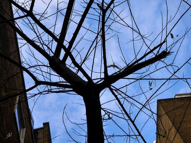 winter_tree_gull