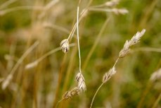 who can resist grasses - if only they would not waver in the wind