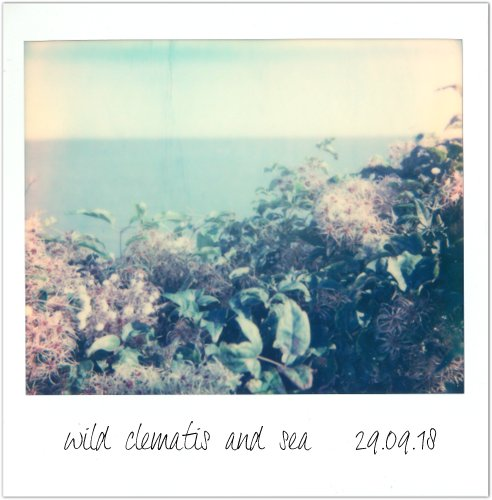 0918_colour_polaroids (2)